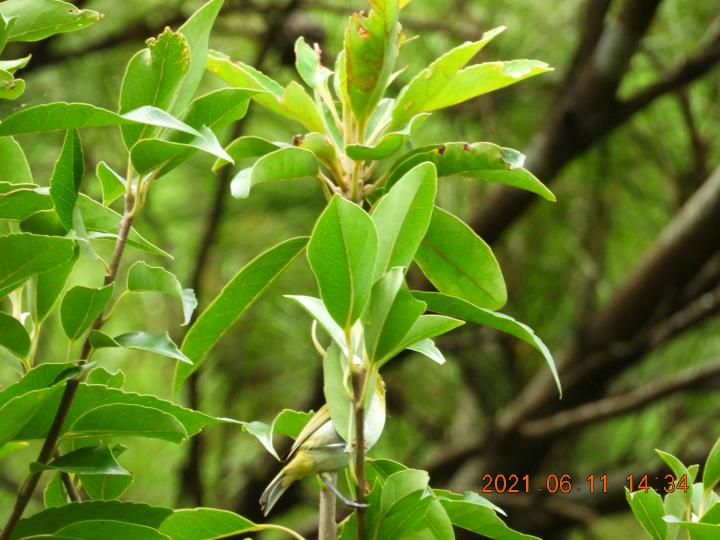 この木の名前教えて下さい。