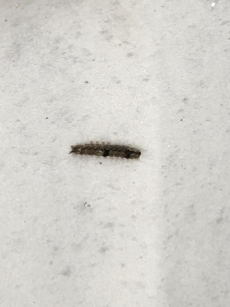 【虫の写真注意】 ベランダでこの毛虫が見つかりました。 なんという種類か分かる方いらっしゃいますか? 環境: マンションの高層階 ベランダにあるもの: ゴミ箱 植木鉢3つ(苔むして放置されているもの、育てているフウセンカズラ) 今後の対策についてもご教示いただければ幸いです。 どうぞよろしくお願いいたします。