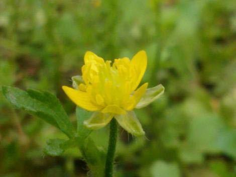 この花の名前をご存知の方いらっしゃいませんか?