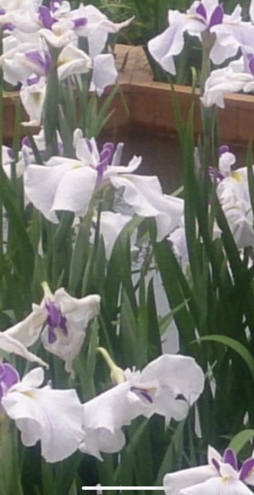 この写真のお花の名前を知りたいのですがどなたかわかる方居ますか?