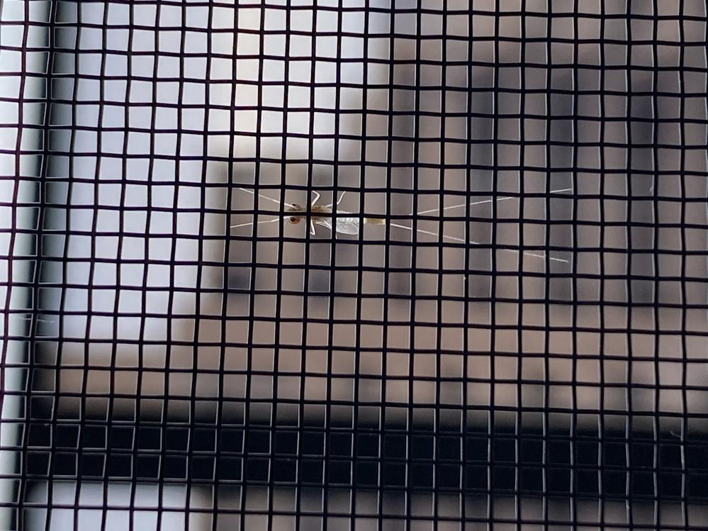 この虫はなんという虫ですか? 蚊ぐらいの大きさです。ベランダにも玄関にもいっぱい張り付いていて、調べても出てきません。
