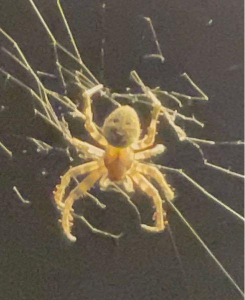 このクモは何というクモでしょうか?