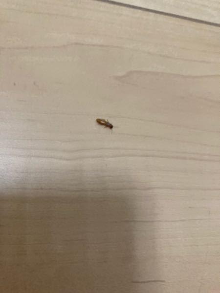【虫の画像アリなので閲覧注意】 家にたまにいるこの幼虫みたいなのってなんですか?見にくくてすみません。