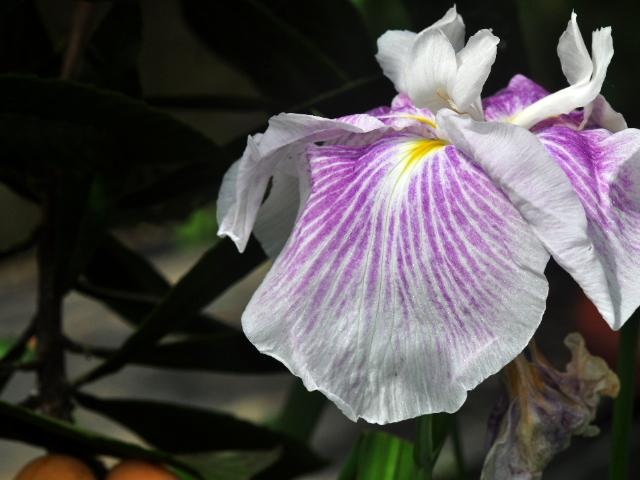 この花の名前を教えて下さい。 背丈は120Cmほどです。今朝撮影しました。