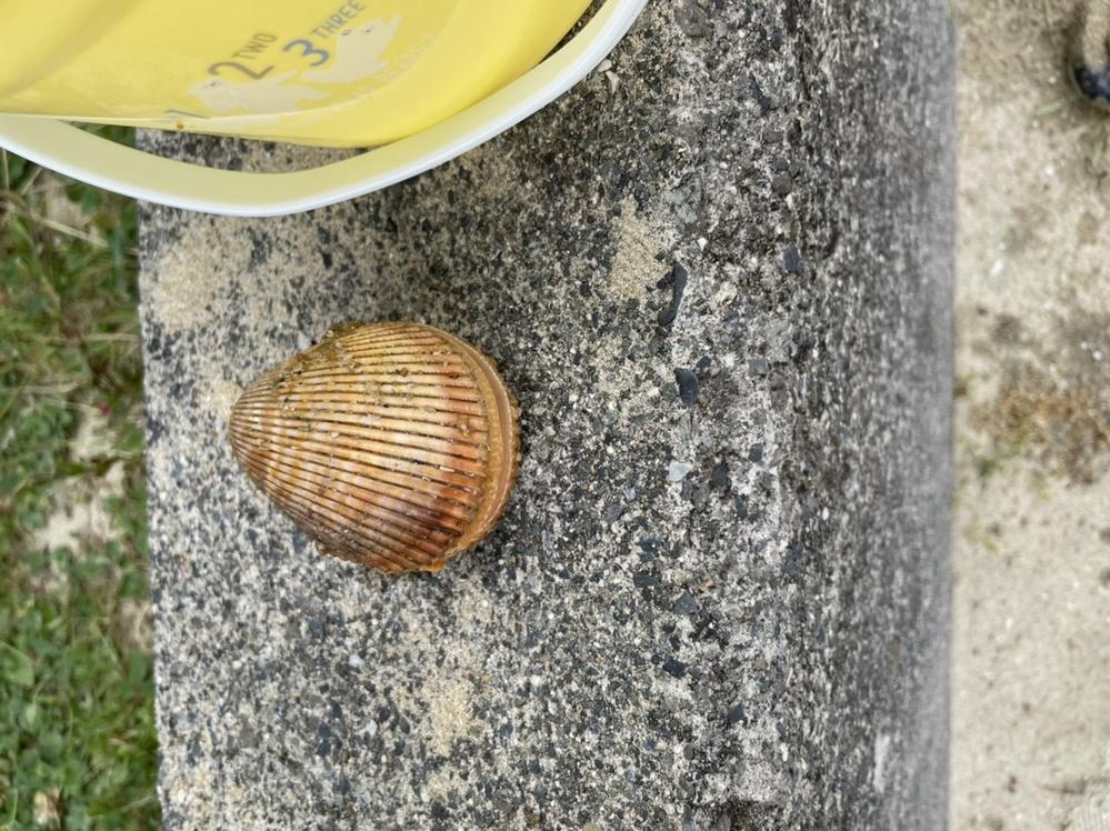 海でこんな貝を拾ったのですが、なんて貝ですか?食べれますか?