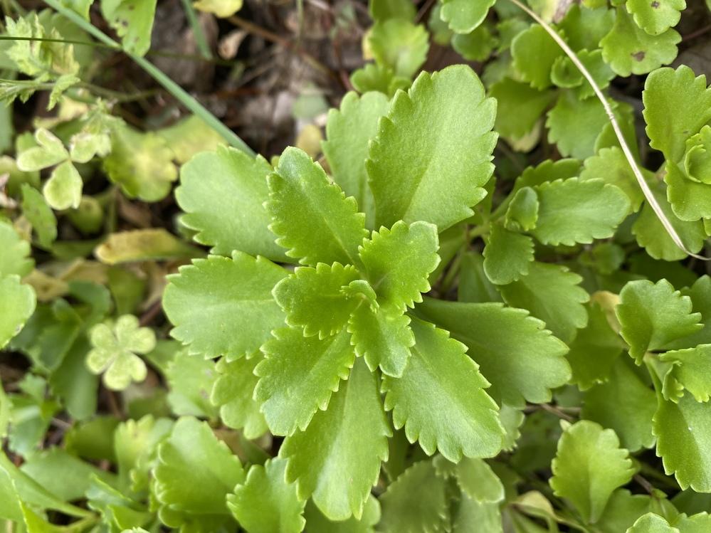 この植物はなんですか?