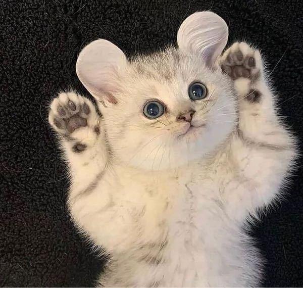 この猫の種類を教えてください!