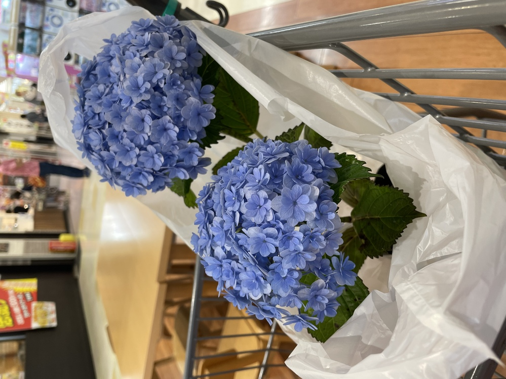 紫陽花を買いましたが名前がわかりません。 画像検索してみましたが、似たような花は出てきますがズバリというものが出ません。 ご存知の方教えてください。