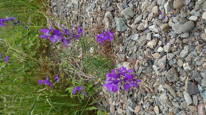 この花は何という種類でしょうか?