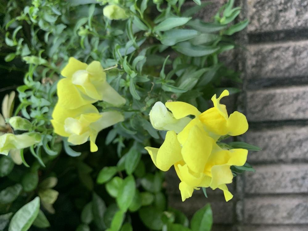 この花の名前をどなたか教えていただけますか? どうぞよろしくお願いいたします。