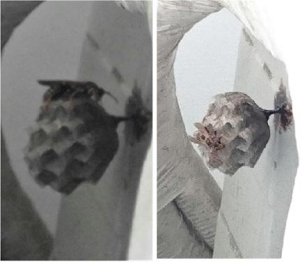 このハチの名前と危険性を教えてください。ベランダのクーラー室外機の裏側に巣を作られました。 画像が分かりにくいのですが体長は1.5センチほどで巣にいるのは1匹だけです。巣を駆除しないとハチが増えていくと思いますが襲ってきたり危険なハチですか?