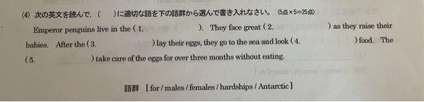 英語のこちらの問題の回答を教えてください。
