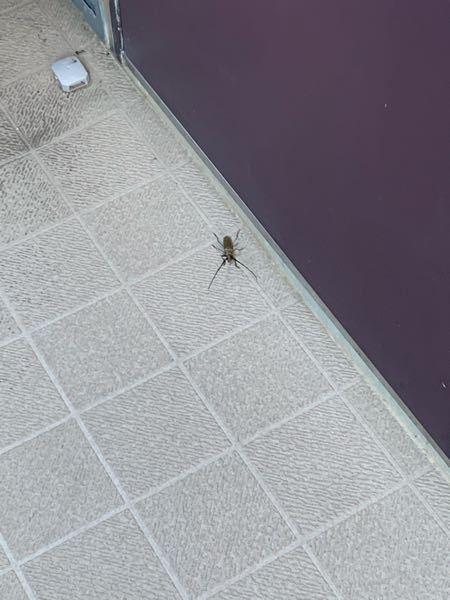 この虫はなんですか? 2、3日前からアパートの廊下にいて、今日自分の部屋の前にいてびっくりしました。 わかる方いたら回答お願いします。