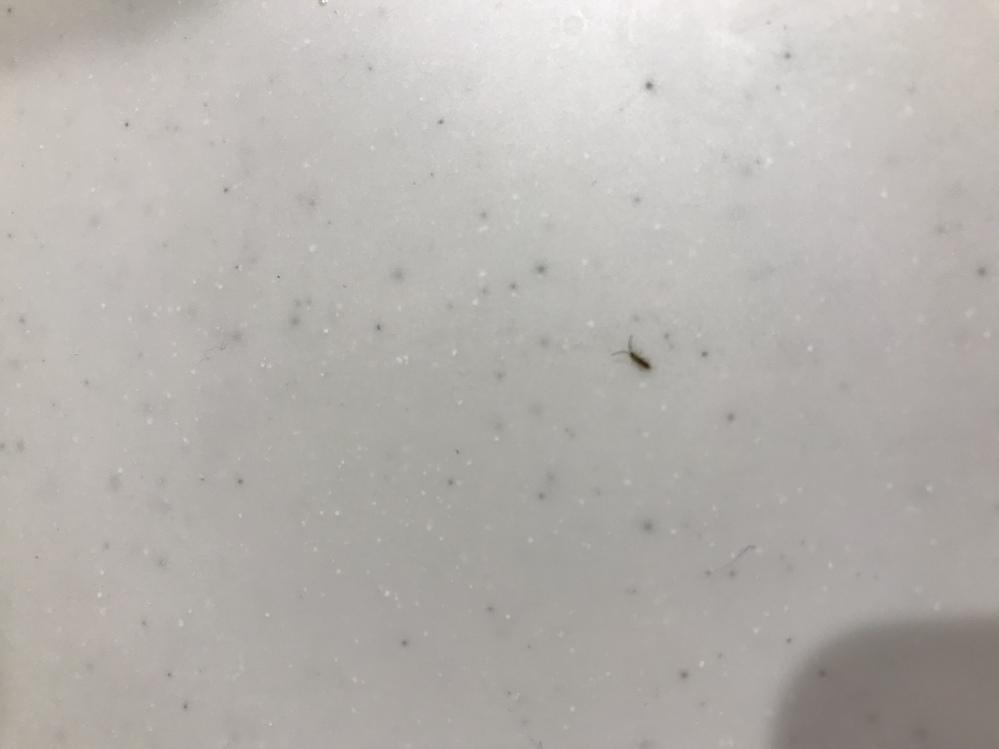 この虫は何なのか教えて下さい!写真上手く撮れてないですが… 最近家の窓際に大量発生して困っています。体調は2mmくらいで、ティッシュで取ろうとするとピョンと跳ねます。 また、発生を抑える対策があれば併せてご教示下さい。 よろしくお願いします。