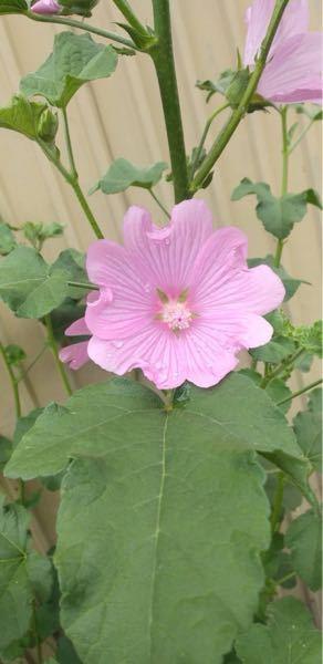 花の名前を教えて下さい。 この花の名前をご存知の方いらっしゃいますか?