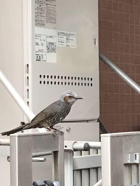 これは何の鳥ですか? 教えて下さい。かわいいですが結構早い速度で飛んでいました。