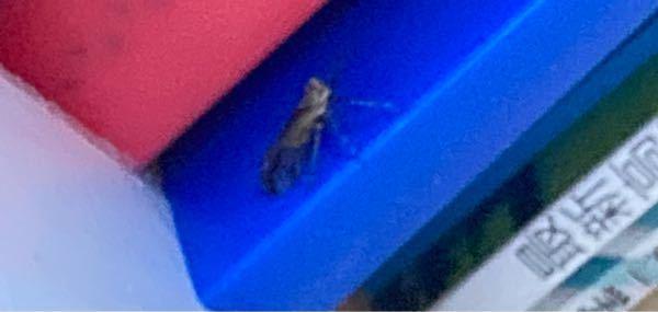 上から降ってきてびっくりしました() 怖いので誰か助けてください() なんていう虫ですか()
