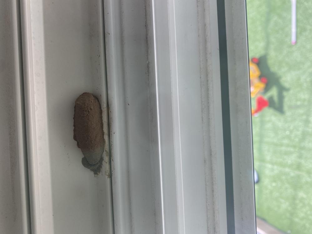 家のシャッターの裏に 何かの巣(土のような) ? が作られていました。 2日前に1度取ってみたのですが 中から何匹か蜘蛛が出てきました。 今日見てみたら また同じところに 巣が作られていました。何かわかる方いますか?