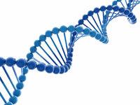 物体を螺旋状にする方法。 3Dモデリングをしています。 一つの物体を螺旋状に羅列したいのですが、いい方法が見つかりません。 Arrayを使用しZ軸方向に増やしてみたのですが、それを上手く螺旋状に変形させることは可能でしょうか?また、良い方法等ありましたら教えてください。 使用ソフトはblender imageはこのDNA構造のような感じです 横棒は要りません