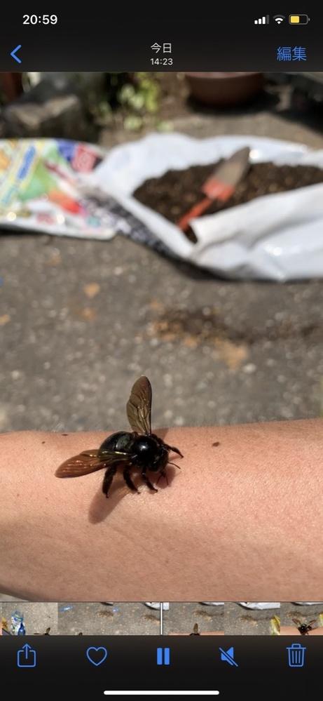 この昆虫の名前をご存知の方いましたら、ご連絡お待ちしています。