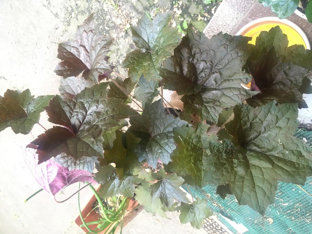 これ何という植物&育て方分かる方いらっしゃいますか?