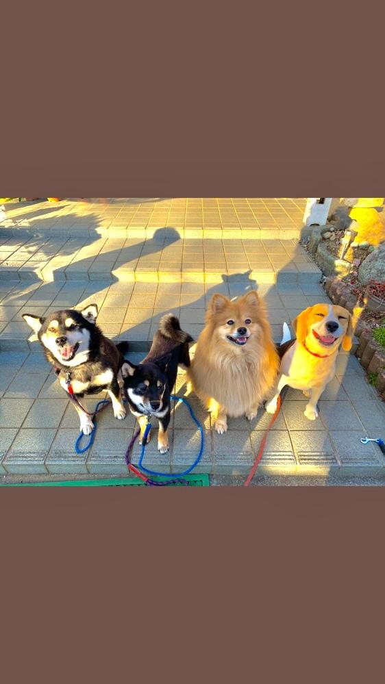 4匹の犬を飼っています。ちょっと仲が悪いんですけど、どういう風にすれば仲良くなりますかね?