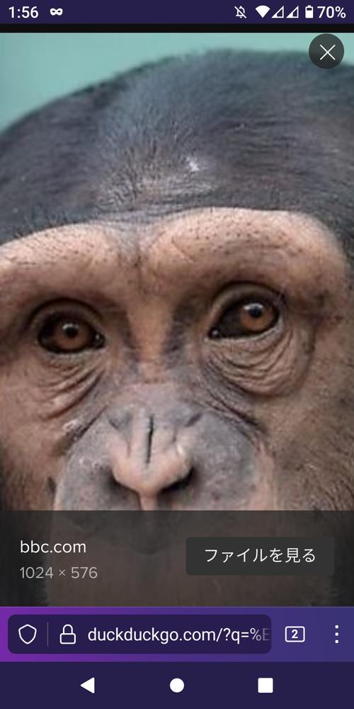 ヒトに眉毛があるのはなぜですか?チンパンジーにはないです
