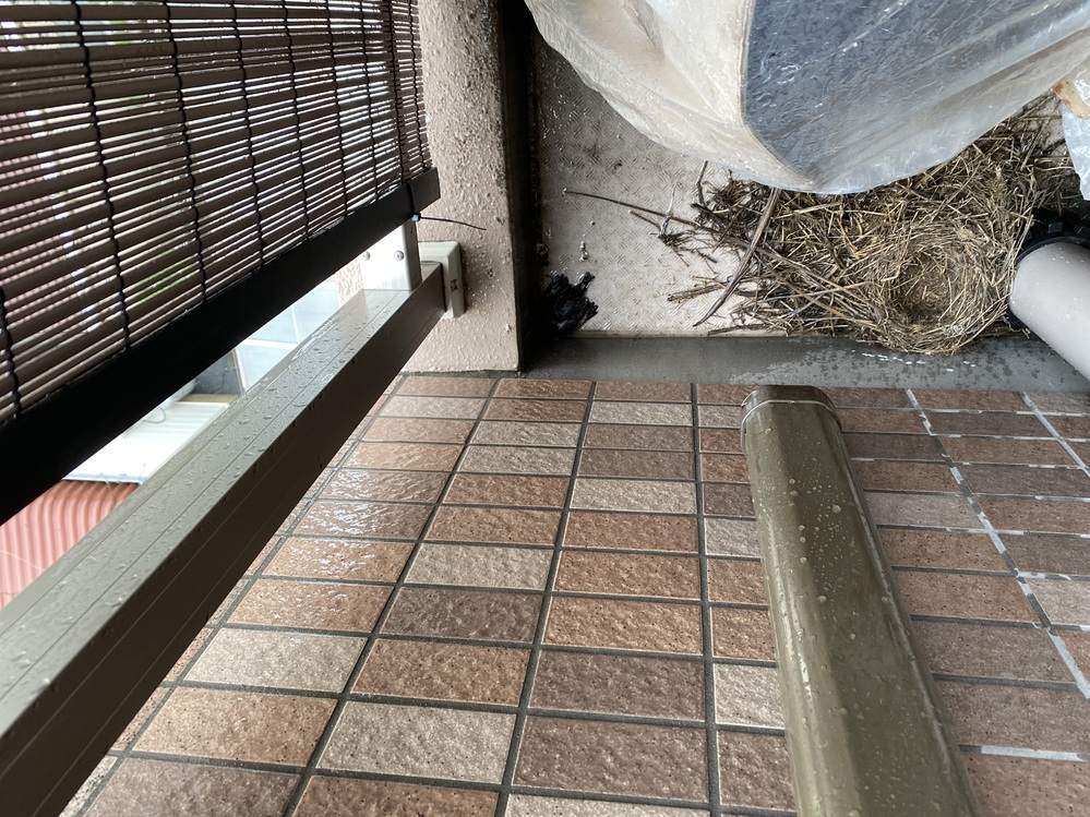 家のベランダです。 鳥の巣があり巣立ってから処理しようと思ったのですが、一匹だけ巣立ってません。 親も来ません。雨も降ってます。 このまま死んだりしますか?汗