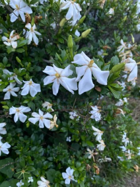 この写真の花の名前教えて頂きたいです