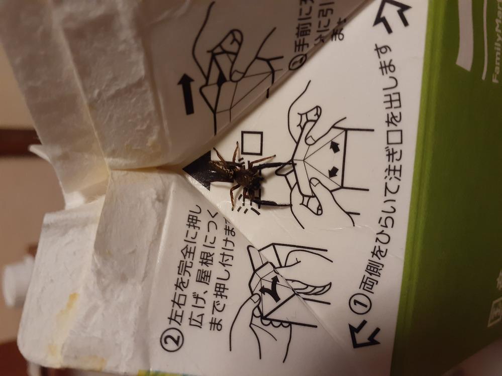 この蜘蛛は何て言う蜘蛛でしょうか? 調べてもよくわからないので回答お願いします。