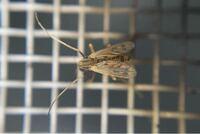 何という昆虫でしょうか。 体長2mmくらい