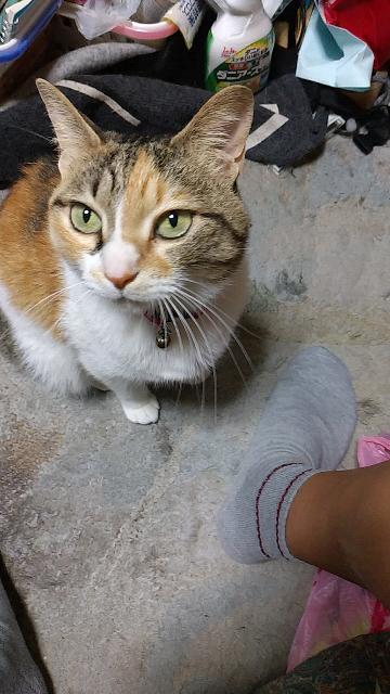 夏になると猫ちゃんの手触りがゴワゴワした感じがしませんか?