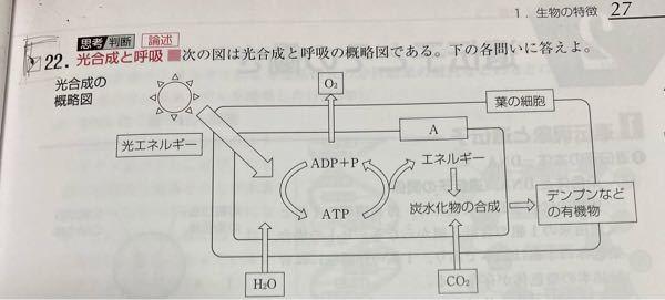 ADP+PのPってなんですか? あとこの図の意味がいまいちよく分からないので わかりやすく教えて貰えたら嬉しいです…
