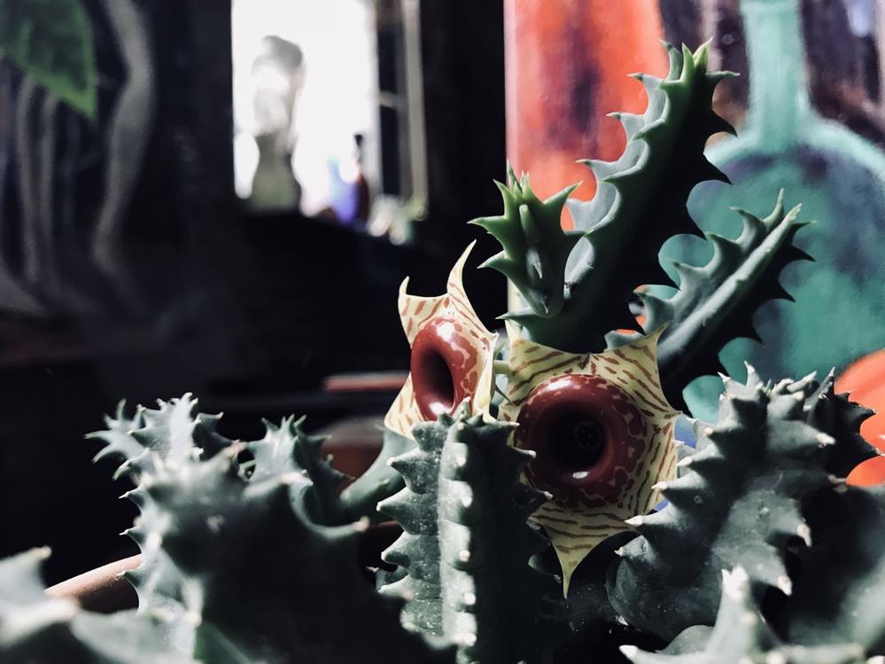 これって何ていう植物ですか?