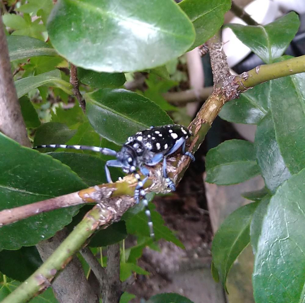 至急! この虫は何という名前の虫ですか?