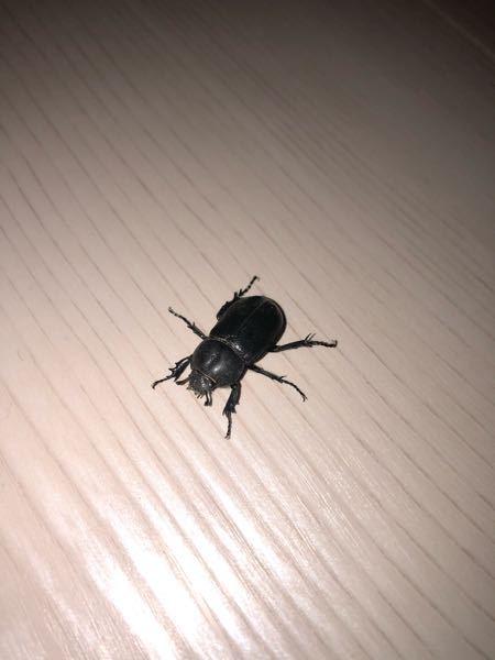 この虫が何か教えてください。