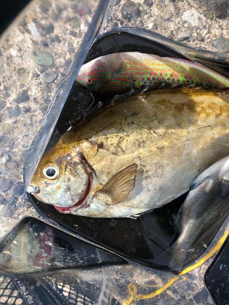 江ノ島で釣りました それぞれの名前と、食べられるかどうか、わかる方お願いします