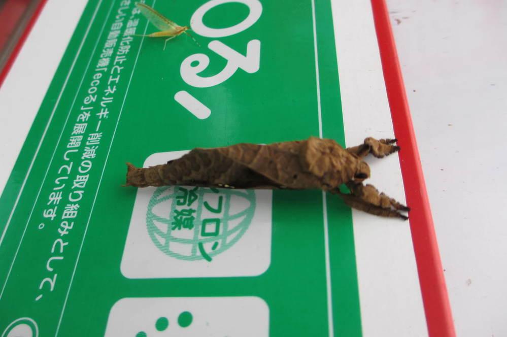 この昆虫の名前を教えてください。