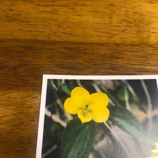 この黄色い花は何の花かわかりますか?