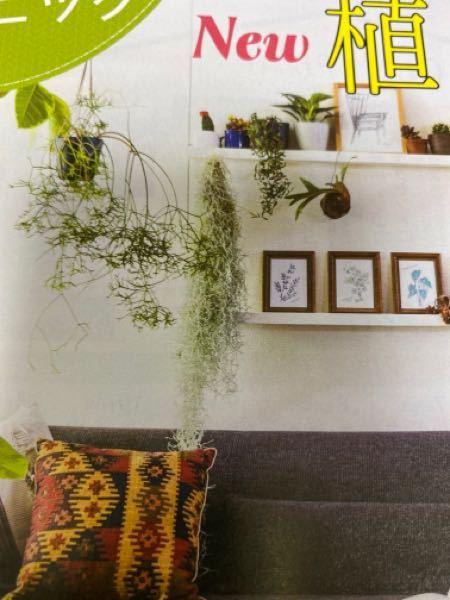 この写真の真ん中の、垂れ下がっている植物の名前を教えてください。