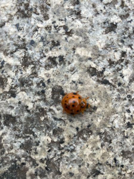 この虫はなんと言う虫ですか?