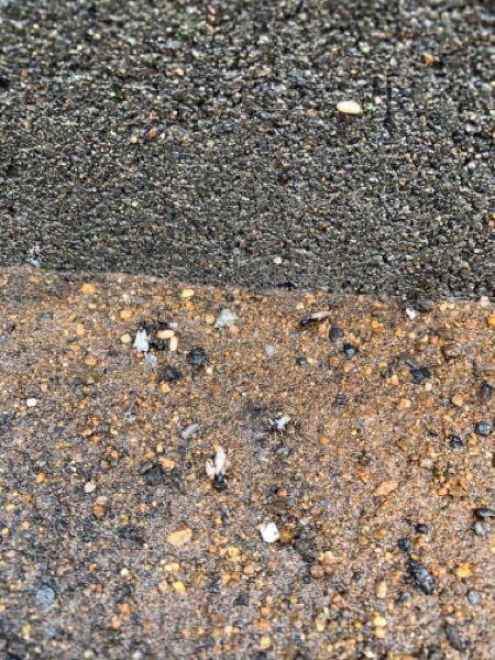 これって羽蟻ってやつですか?