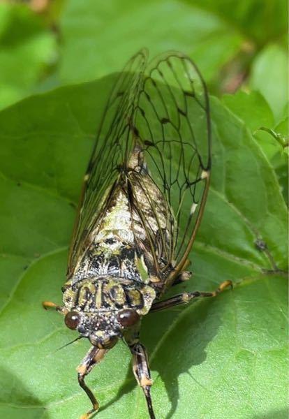 この昆虫の名前を教えて下さい! (本日6/20に長野県の山中にて撮影しました)