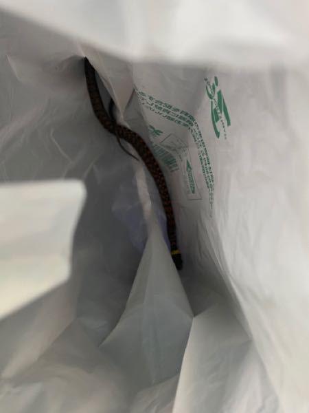 この蛇の名前が知りたいです 首のとこに黄色いラインがあります