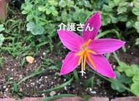 この花の名前は何ですか? 撮影日は2021年6月14日で撮影場所は兵庫県です。 よろしくお願いします。