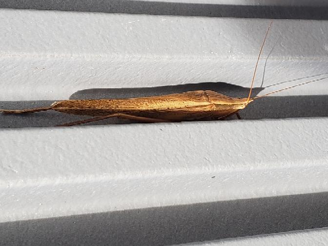 この虫の名前はなんでしょうか? 先月見かけました。