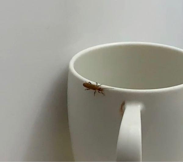 この虫ってなんですか?! 家にいました。飛びました。。。