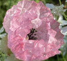 画像の花の名前を教えてください。
