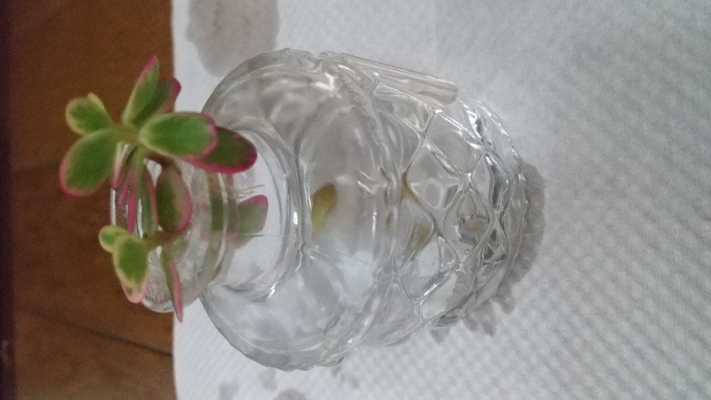 この植物は何でしょうか? 育て方等、簡単で良いので、教えていただけると助かります。 よろしくお願いいたします。