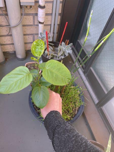 この植物の名前を知りたくて、 ご存知の方から教えていただければいいなあと思います。宜しくお願いします。
